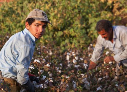 Imagen ilustrativa de agricultores trabajando en el campo