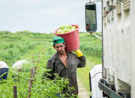 Foto ilustrativa del trabajo en el sector agrícola